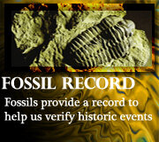 Fossils and the Fossil Record
